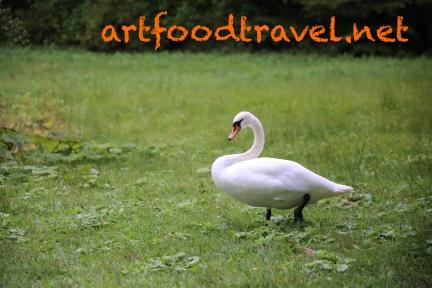 artfoodtravel_schwan_2